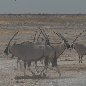 Etosha, in season, is one of the best game parks in Africa.
