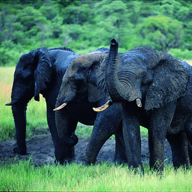Including the Addo Elephant Park…