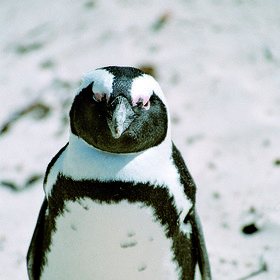 …and African penguins, you will not be bored!