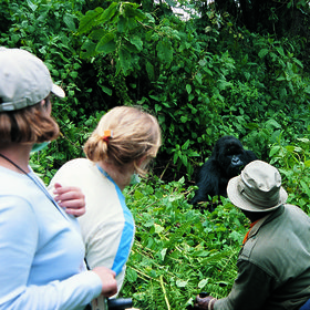 Although gorillas are the main draw (and easily visited as a 3 or 4 day add-on from Tanzania)…