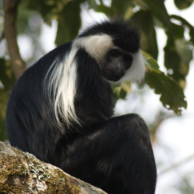 ...there is more to Rwanda than monkeys!