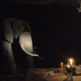 Wildlife in camp, such as this unexpected dinner guest, is a common occurrence…