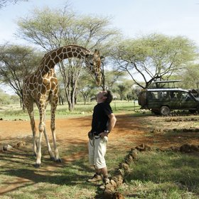 Kenya's wildlife is not usually this tame, but the hunting ban means it's often easy to see.