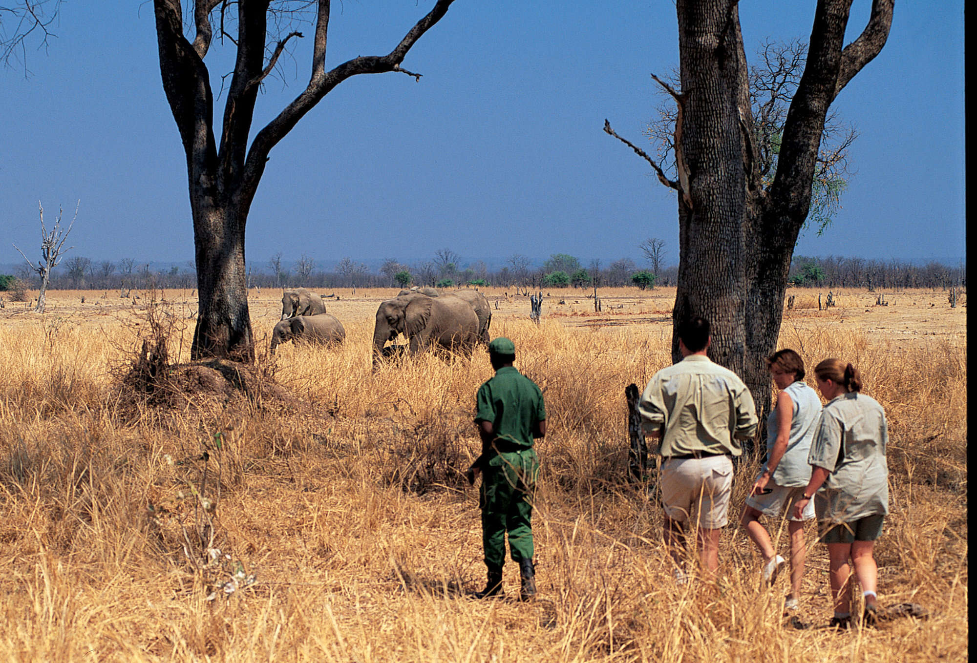 Zambia safari to South Luangwa National park including Norman Carr Safaris' camps: Kapani Lodge, Luwi Bushcamp, Nsolo Bushcamp, Mchenja Bushcamp and Kakuli Bushcamp.
