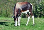 Bontebok Self-drive Safari