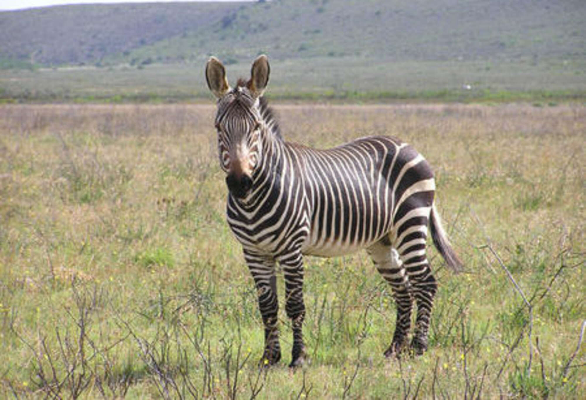 Cape Mountain Zebra Self-drive Safari – to Cape Town, Namaqualand, the Winelands and Hermanus – South Africa
