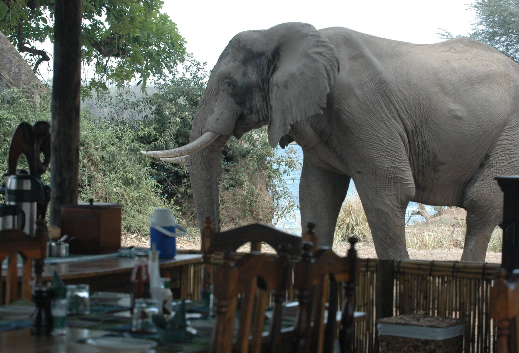 Zambia safari to Lower Zambezi National Park including Chiawa Camp and Old Mondoro Bushcamp.