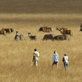 Chelinda offers guided walks through the Nyika Plateau, which focus on the huge range of flora.