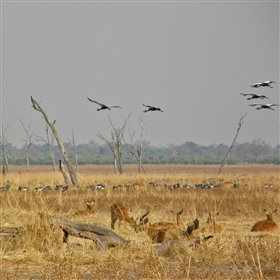 ... including visits to the salt pans where crowned cranes flock by their hundreds.