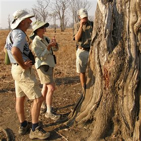 Tafika offers morning or afternoon walking safaris.