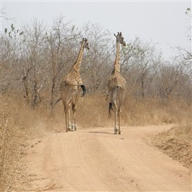 Walking safaris are often possible here…