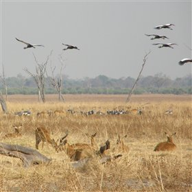 Full day trips are also offered to areas including the salt marsh where cranes flock.