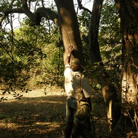 Discover this fascinating area on a professionally guided walking safari...