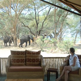 ... and watch the passing wildlife all from the relaxed vantage point of a comfy chair.