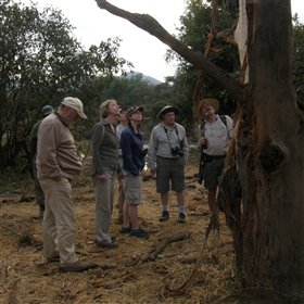 Informative walking safaris are also offered...