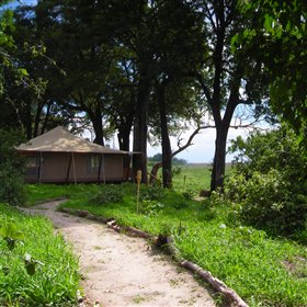 Linyanti Bush Camp is a simple, traditional tented camp.