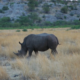 If you are lucky you may spot rhino on the reserve.