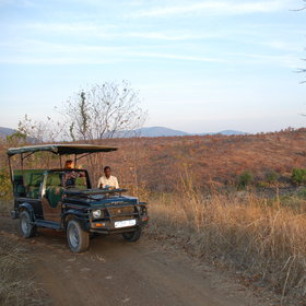 Head out in open-top safari vehicles with one of the lodges experienced guides.