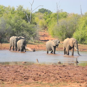...and watching elephant crossing daily at low tide