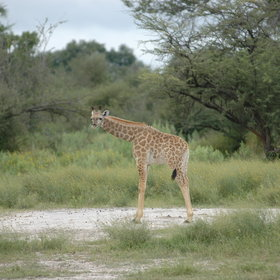 A good variety of wildlife can be seen around the camp...