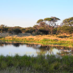 Activities at Deception Valley Lodge focus heavily on walks and drives with local bushmen...