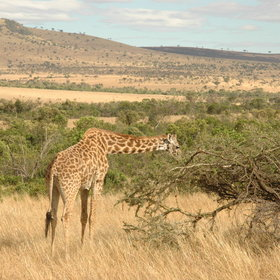 ...which you can arrange personally with your guide to get the most out of your safari stay...