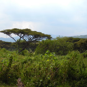 …with lovely views over the hills on top of the crater rim.