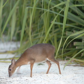Mammals are rare on this special island, but with a little luck …