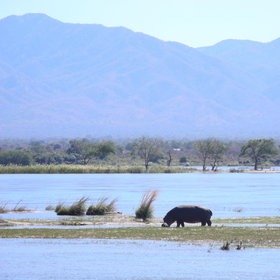 ...providing great views across the meandering river towards the Zambian shoreline.