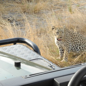 Go on a 4WD safari with an experienced guide...