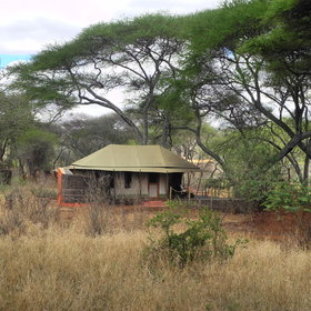 The tented rooms are located under shady acacia trees.