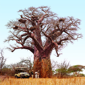There are many activities offered from Pamushana, such as game drives...