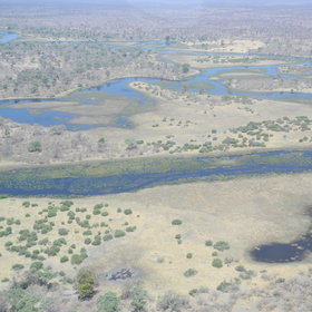 DumaTau Camp is situated in northern Botswana's Linyanti Reserve...