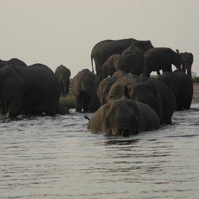 ...during which you can see large herds of elephants during the dry season...