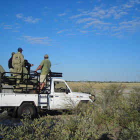 4WD safari drives take you through classic Kalahari landscape.