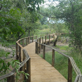 The chalets are connected by wooden walkways, leading through shady trees.