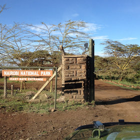 Most guests arrive from JKIA or Wilson Airport via the East Gate of Nairobi National Park…