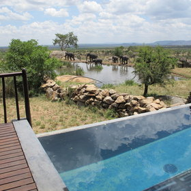 The Terrace Suites also have small plunge pools; all with views over the waterhole or savanna.