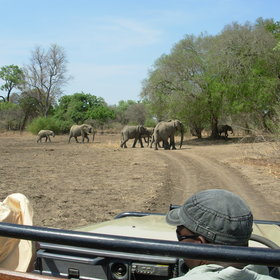 Day and night game drives offer plenty of wildlife...