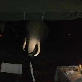 Dinner is served in the dining tent, whose open sides encourage close encounters.