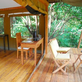 Rhino River Camp makes full use of its forest environment to immerse guests in the Meru ecosystem.
