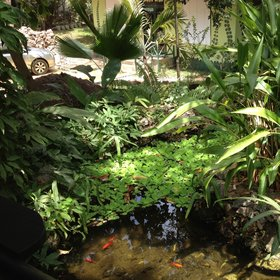 You arrive via a luxuriant garden packed with tropical plants and a fishpond…