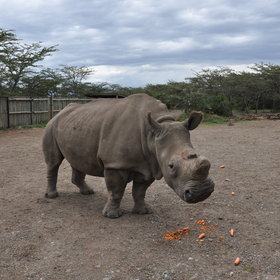 … a visit to the large black rhino sanctuary…
