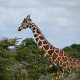 It is home to giraffes, zebras and many other species…