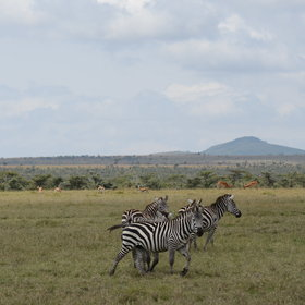 The Ol Pejeta Conservancy covers 360km² in central Kenya.