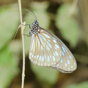 …is a haven for countless smaller species of wildlife, including this butterfly.