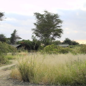 There are 9 tents spread amongst acacia trees...