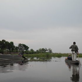 ...as well as mokoro and motorboat cruises to explore the marshes.