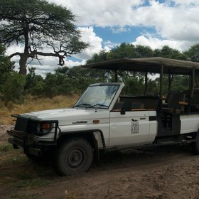 Activities are centered around game drives throughout the Savute area in open 4x4 safari vehicles.