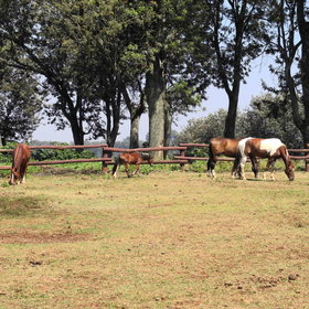 ..and horses for guests to ride around the surrounding coffee plantations.
